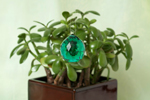 Green Crystal and Plant